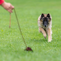 Alexander M. Ewald Mobiler Hundtrainer