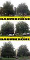 http://www.baumkrone-hannak.de/