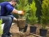 Bild: Baumpflege express Baumfällung