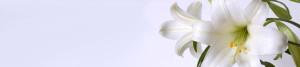 Logo Bella Luna Inh. Ebeling Sarah
