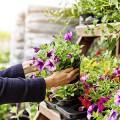 Blumenhaus Bande Inh. Andrea Bande Garten- und Landschaftspflege