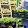 Bild: Blumenhaus Bande Inh. Andrea Bande Garten- und Landschaftspflege