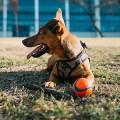 Braver Hund Berlin