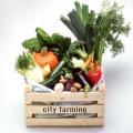 city farming gmbh
