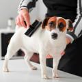 City-Hundecenter mit Scheersalon und Lieferservice Zoohandlung