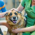 Connys Hundepension - Hundetagesmutter Hamburg