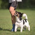 Der Hamburger Hundetrainer Alfred Wolvers
