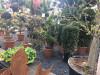 Bild: Der Pflanzengarten-Weihmann