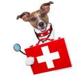 Logo Bader-Mechler, Franziska Dr.