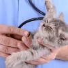 Bild: Dr. Werner Eckmann Tierarzt