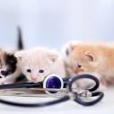 Bild: Forster, Ulrike Dr. Tierarztpraxis in Solingen