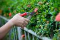 Bild: Garten- und Landschaftsbau Aridi in Essen