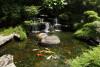 Bild: Gartenbau Gies