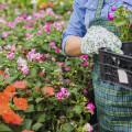 Gartencenter - Abt. Pflanzen Baumarkt