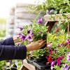 Bild: Gartencenter