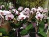 Bild: Gartencenter Schley's Blumenparadies