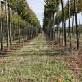 Herbst Immo Pflanzenkontor GmbH Baumschule
