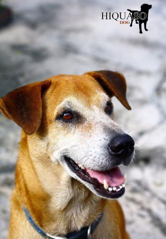 Hiquaso - Hundefutter