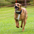 Hunde-Schule-Pension Maier