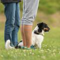 Hundeliebe Training