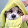 """Bild: Hundesalon-Halle """"Molly & Felix"""" Tierpflegesalon"""