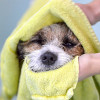 Bild: Hundesalon Herne Andrea Krueger