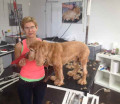 https://www.yelp.com/biz/hundesalon-laim-nymphenburg-m%C3%BCnchen