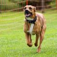 Bild: Hundeschule und Verhaltensberatung – Sandra Hoffesommer (Hanneken) in Nordhorn
