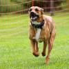 Bild: Hundeschule vierpfotenbewegung Elke Hensel