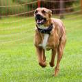 Hundetrainerin - Nancy Wendler