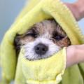 Bild: Ihre Hundefriseurin in Bremerhaven