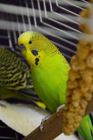 Kleintiere Vögel
