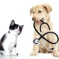 Bild: Kim H. Tjaden Tierarztpraxis in Mönchengladbach