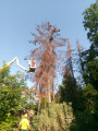 Bild: Klaßen Baumfällungen Christoph Klaßen in Viersen