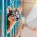 Koop Inga Hundepension