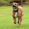 Bild: Learning by Dog - Die Hundeschule