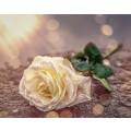 Margret Wallor Bestattungen