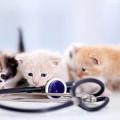 Bild: Martin Kniese Tierarztpraxis in Darmstadt