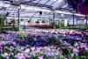Bild: Maylahn Blumen und Floristik   Lothar Maylahn
