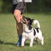 Bild: Mit Hunden Leben - Hundeschule