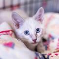 Mobile Katzenbetreuung Heike Tenfelde