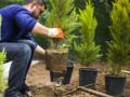Bild: Nossel Garten- und Landschaftsbau Gartenbau in Hagen, Westfalen