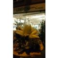 Petra Lindengrün Blumenfachgeschäft