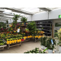 Pflanzen Kölle Gartencenter GmbH & Co. KG