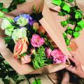 Rosenrot Blumen und Pflanzen