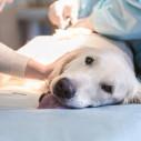 Bild: Schall, Horst Dr.med.vet. Tierärztliche Klinik in Ludwigshafen am Rhein