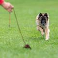Superhund dipl. Tierpsychologin (ATN) Christine Petersen