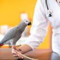 Bild: Tierarztpraxis am Zoo Dres. Sarah und Ulf Reichert in Krefeld