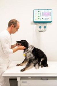 Tierarzt Longerich