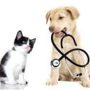 Bild: Tierarztpraxis Oldenburger Straße, Ulrike Gollmer Tierarzt in Berlin